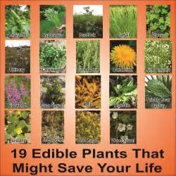 Common Backyard Mushrooms Wild Plants You Can Eat A List Of Edible Wild Plants