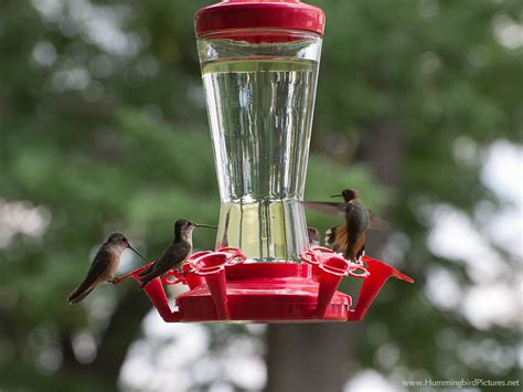 top 28 how do hummingbird feeders work 17 best images