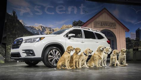 subaru golden retriever commercials golden retrievers archives torque