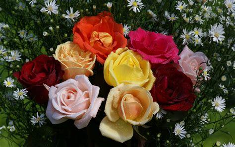 imagenes de rosas y flores hermosas rosas