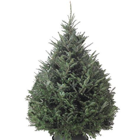 types of real christmas trees the home depot