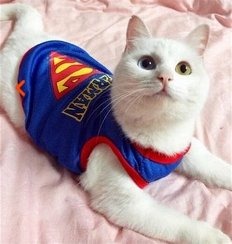 cat clothes cat superman vest accessories products for cats