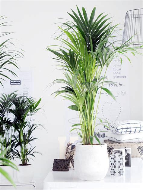 die richtige zimmerpflanze f 252 r das schlafzimmer