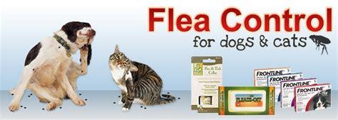 flea killer for dogs flea flea killer