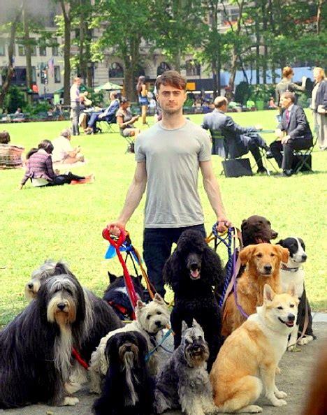 daniel radcliffe dogs daniel radcliffe walker
