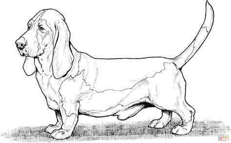 Coloring Pages Hound Dog | bassett hound dog coloring page free printable coloring