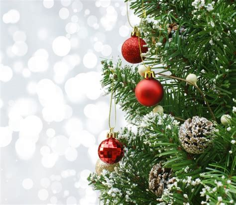 tree with decorations a pine tree with decorations photo free