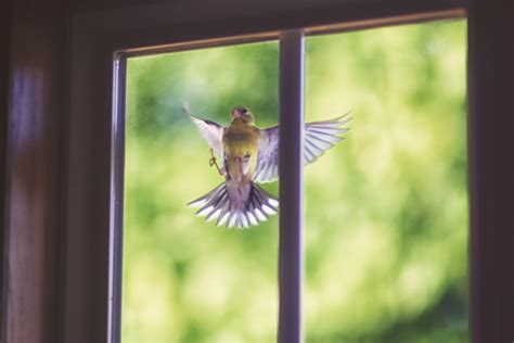 3 window peckings bring death 10 superstitions about