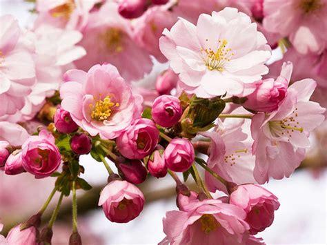 foto fi fiori immagini di fiori donna moderna