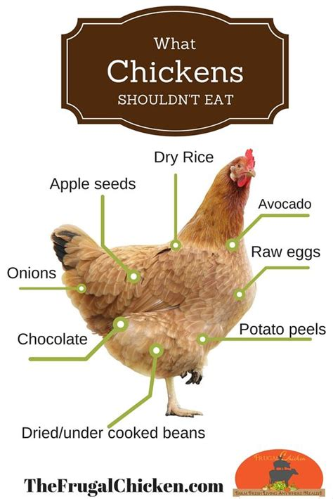 Backyard Chickens What Can They Eat The World S Catalog Of Ideas