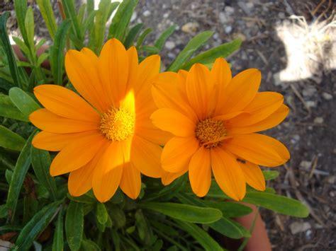fiori di estate fiori d estate foto immagini piante fiori e funghi