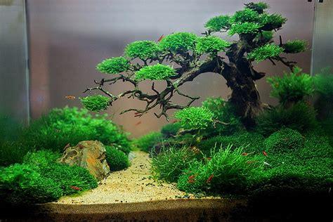 aquascape nz the 25 best aquarium aquascape ideas on pinterest