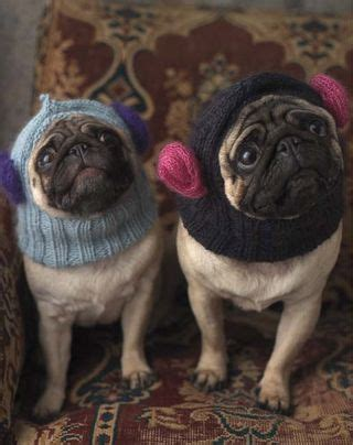 knit your own pug knit your own hamster house and other offerings from pet projects l a at home