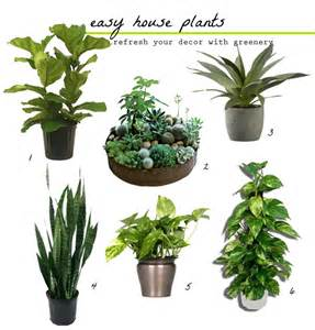 easiest indoor plants belle maison fresh greens decorating with houseplants