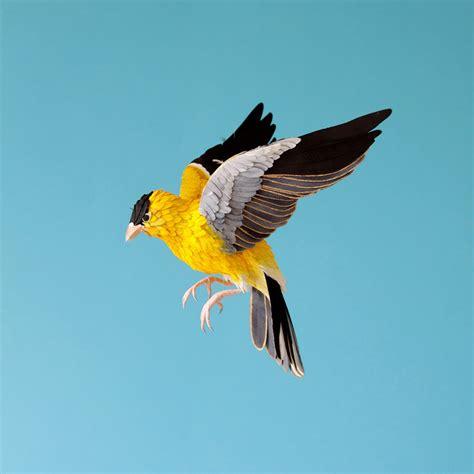 Bird With Paper - diana beltran herrera paper birds