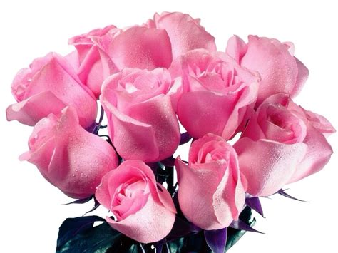 imagenes rosas muy hermosas ramo de rosas rosa muy bellas imagenes de rosas