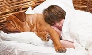 wieviel schlaf braucht ein wie viel schlaf braucht ein hund