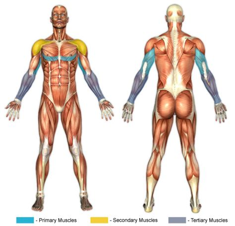 Assisted Bench Press Machine Dips Dip Machine Chunk Fitness
