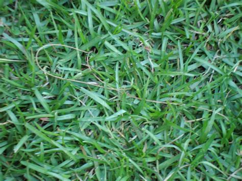 top 28 common grass types control options for common minnesota lawn and landscape types of