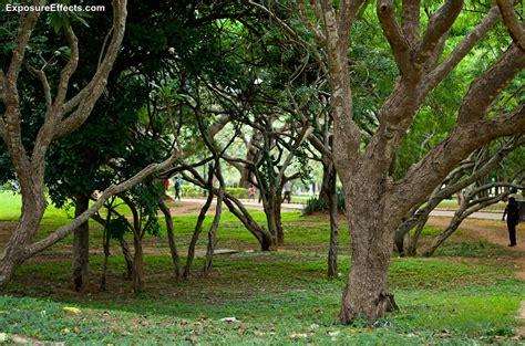 lalbagh botanical garden lalbagh botanical garden in bangalore india ghoomo
