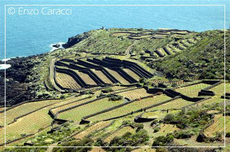 terrazzamenti liguri orchidacee nell isola di pantelleria forum natura