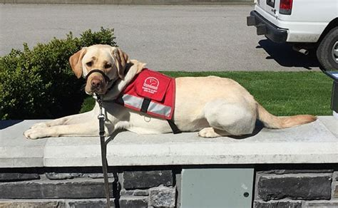 how to a diabetes service at home how service dogs help canadians living with diabetes sun financial