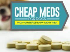 how to buy a puppy safely best food for pugs how what to feed pugs top tips