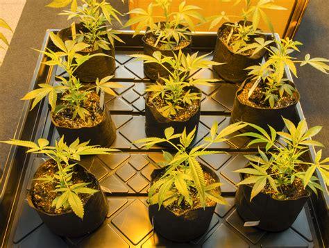 Florida Department Enforcement Records Health Department Sued Marijuana Records Florida Politics
