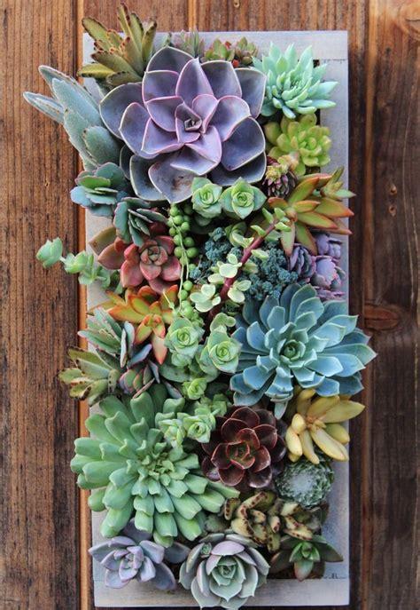 indoor succulent planter best 25 succulents ideas on indoor succulents