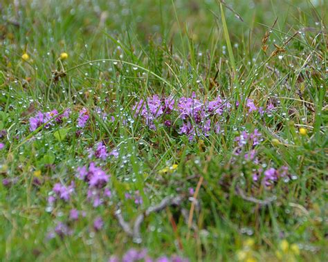 grass and tiny purple flowers with raindrops explore