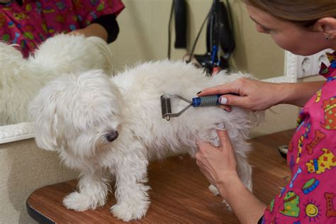 Why Do Animals Shed Their Fur by Why Dogs Shed How Grooming Will Help Evergreen Kennels