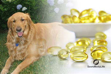 fish dosage for dogs fish for dogs benefits cautions and advice