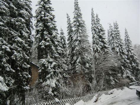 hotel haus am hochwald bild quot blick aus dem fenster in die winterwelt quot zu hotel