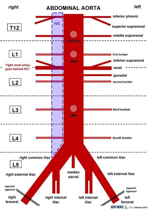 artery diagram anatomy abdominal aorta geeky medics