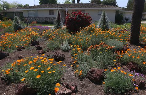 homegrown california landscaping in hanford california