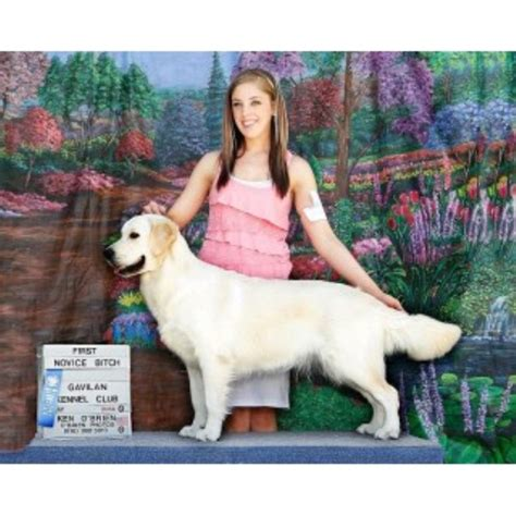 tucson golden retriever talini golden retrievers golden retriever breeder in tucson arizona listing id 9871