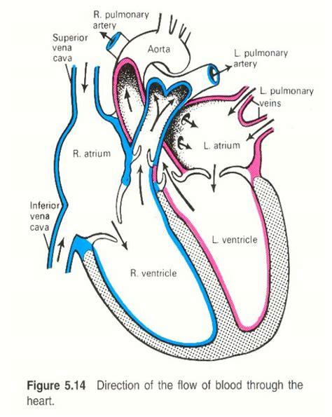labelling  heart worksheet diabetes