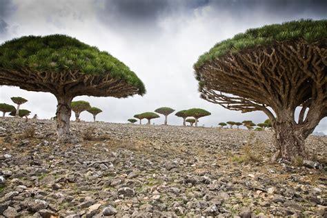 alien place  earth socotra island  yemen