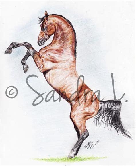 imagenes a lapiz de caballos dibujos a lapiz de caballos saltando buscar con google