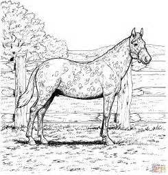 coloring pages of appaloosa horses appaloosa with leopard spotted coat coloring page