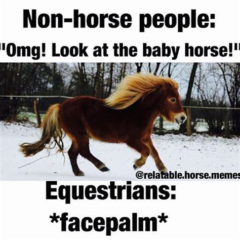 horse memes the horse forum