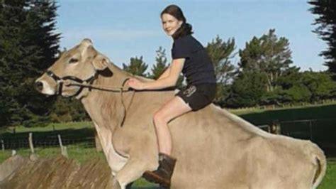 Sho Kuda Harganya tak kuat beli kuda gadis ini latih sapi untuk ditunggangi
