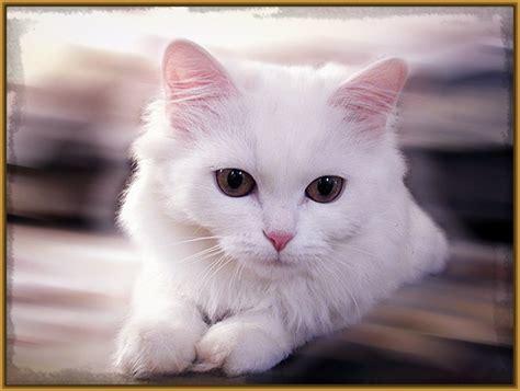 imagenes tiernas gatitos imagenes de gatos tiernos bebes con frases