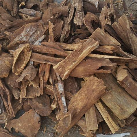 Crrante Lidah Buaya Shoo 1 L 1 5 kg uncleaned agarwood harvest gaharu