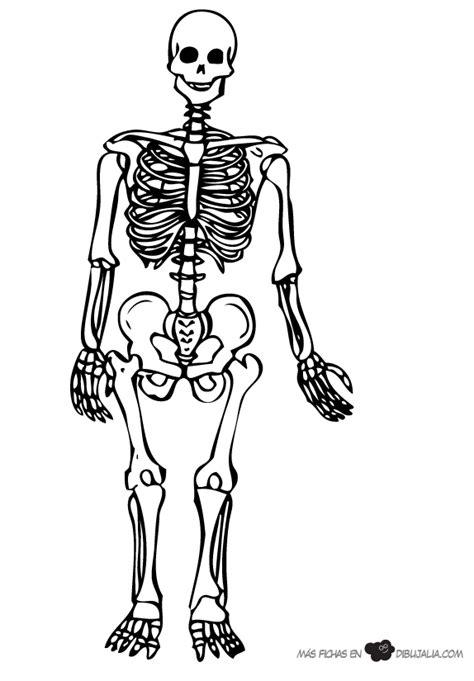 identificar imagenes sensoriales esqueleto humano para colorear e identificar sus partes