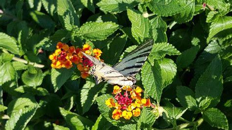 il giardino delle farfalle b b il giardino delle farfalle pugliola fr