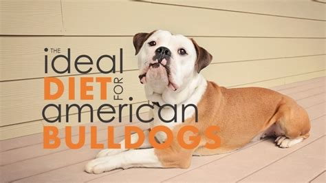 best food for bulldogs best food for american bulldogs bad herepup