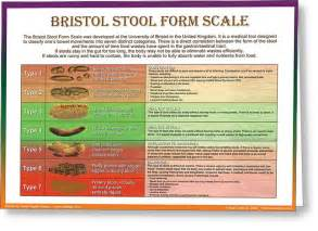 bristol stuhl skala bristol stool form scale digital by galina imrie