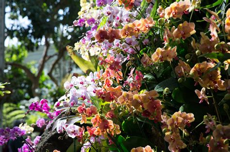 Orchid Show New York Botanical Garden Your Ideal Week March 24 March 30 Based