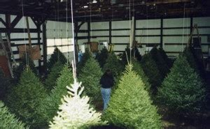 syracuse christmas tree farm beautiful christmas trees